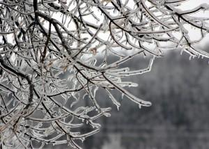 december frozen branches