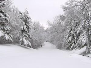 snow heavy